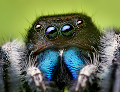 What's going on with all the spider pictures on this page.  Stop it Reeko, you're scaring me!