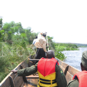 Wardens search the area for the killer crocodile