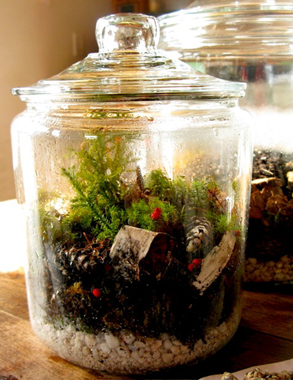 Terrarium, vivarium, or garden in a bottle