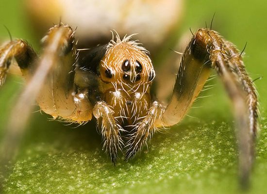One example of an orb-weaver spider