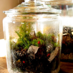How to create a terrarium (or vivarium or self-contained bottle garden)